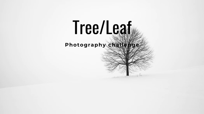 """""""A Tree or Leaf"""" - Photography Challenge"""