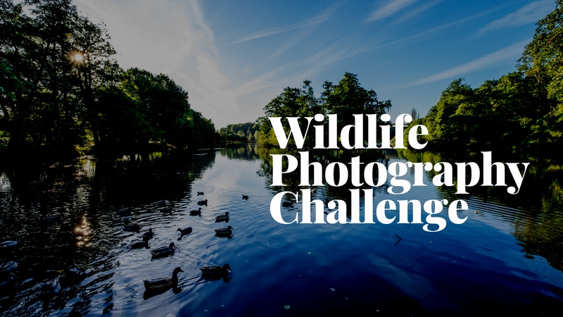 Wildlife Photography Challenge