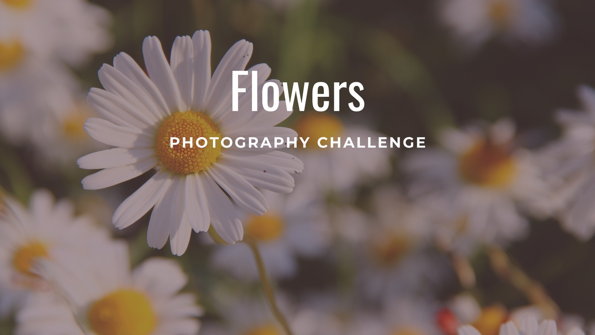 """Flowers"" - Photography Challenge"