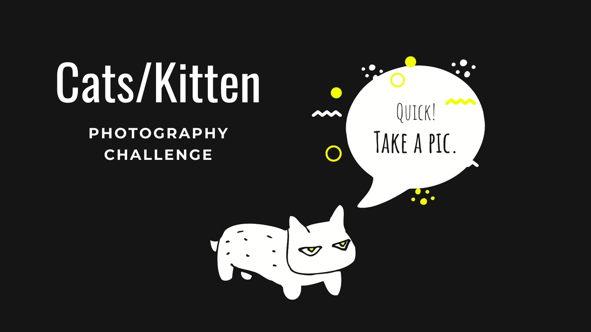 """A cat or kitten"" - Photography Challenge"